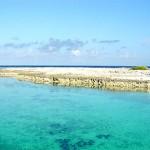 Reef - Bora Bora