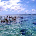 Fish trap - Taha&#039;a