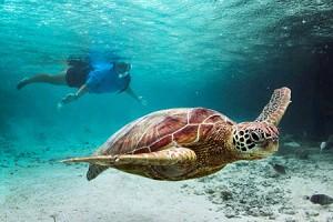 The turtle sanctuary