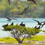 ©BenThouard_Tahiti Tourisme