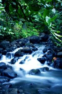 ©FCharreard_Tahiti Tourisme