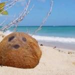 Coconut from Tahiti
