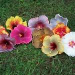 hibiscus-croque-errant.com