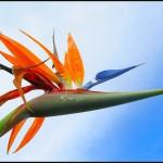 oiseau-paradis-titriva.unblog.fr
