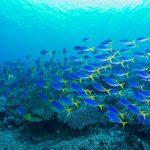 39_Diving-LR